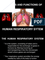 respiratorysystem-120105050542-phpapp01