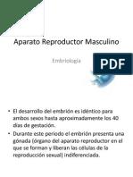 Aparato Reproductor Masculino Embriologia