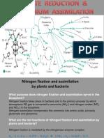 Biokim 11 Nitrate Assimilation