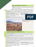 25 Series de Vegetacion Climatofilas y Edafoxerofilas-08