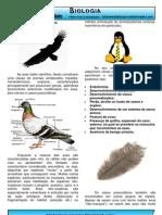 Aves Resumo