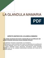 15 La Glandula Mamaria