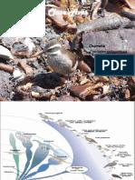 Clase Aves.pdf