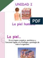 1 La Piel Humana