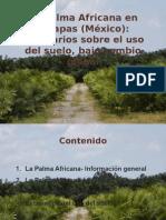 Palma en Chiapas