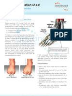 Foot Tendon Tibialis Posterior Dysfunction Acquired Adult Flat-foot