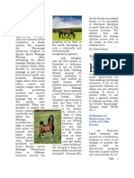 Equine Massage Therapy Newsletter