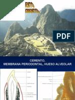 Complejo Dento Alveolar (Periodonto)