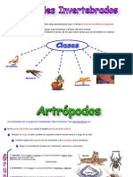 abri 26- Invertebrados