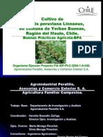 Cultivo Goldenberry(3)
