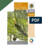 Biología y aspectos taxonómicos de dos especies de mosca sierra de los pinos en Chihuahua