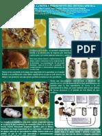 Poster Varroa