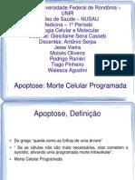 Apoptose - Slides