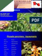 Cultivos Andinos Clase 18 Uchuba