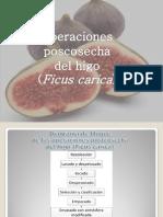 Operaciones Postcosecha Del Higo