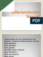 7-diferenciacinsexual-121015020140-phpapp02