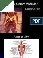 Anatomi Sistem Muskular