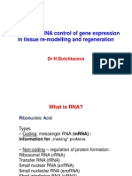 2_microRNA mRNA Control of Gene Expression