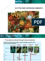 plant and seet powerpoint