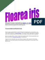 Floarea Iris