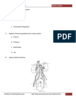 Urinary System Notes Outline