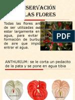 Conservación de las flores.2009