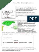 Ficha de avaliação - plantas 6º ano