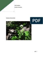 Valeriana Clarioniifolia