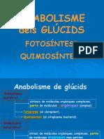 Tema 12 Fotosintesi Quimiosintesi