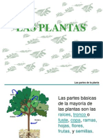 1 Las Plantas
