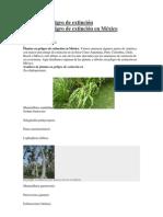 Plantas en peligro de extinción