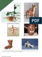 Los motivos característicos de la cerámica Huari son biomorfos