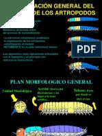 3. Organización General del Cuerpo de los Artrópodos.ppt.pps