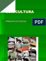 RAZAS CUNICULAS