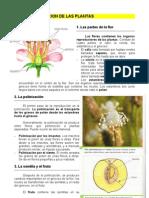 5.La Reproduccion de Las Plantas