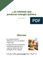 7.1 Metabolismo Celular