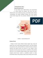 Anatomi Kelenjar Saliva