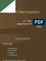Normal Haemopoiesis