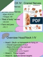 Head IV Cranial Nerves