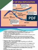 DNA Dan Sintesis Protein