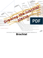 How to Draw the Brachial Plexus