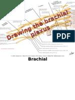 How to Draw the Brachial Plexus