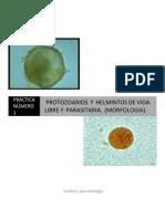 1.1 Protozoarios y Helmintos