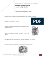 Anatomy for Beginners - Reproduction Worksheet