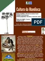 Aula Cultura Da Mandioca