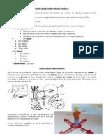 FICHA ATLETISMO Y ORIENTACION 3º Y 4º