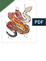 anatomia dibujo biologico.docx