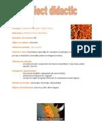 morcovul_observare
