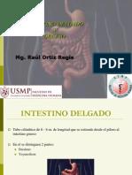 Clase Intestino Delgado y Grueso 2013