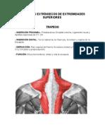 musculos EESS